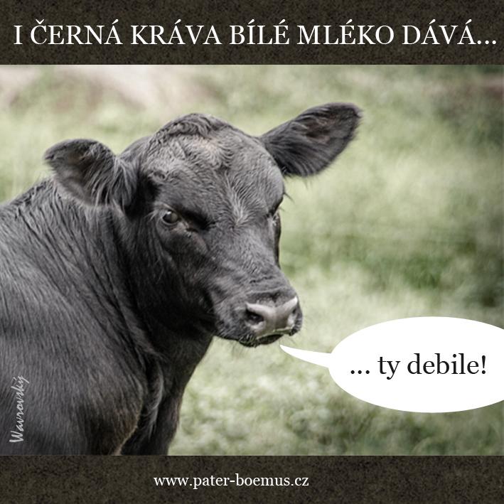 Pater Boemus, humoristický vzdělávací magazín, Wavrovský, Společnost bratranců Veverkových, Lidl, I černá kráva bílé mléko dává