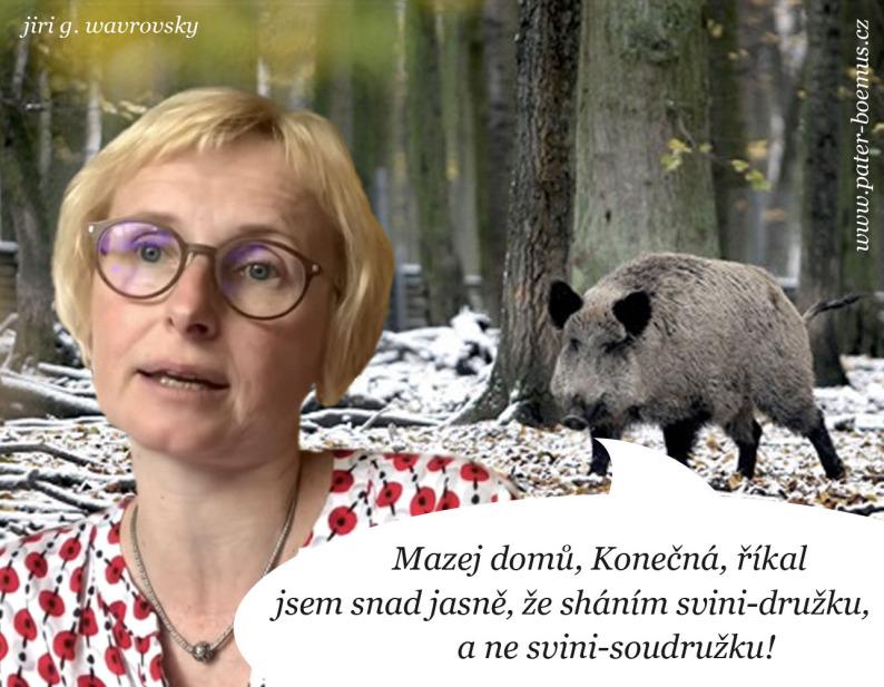 Pater Boemus, humoristicko vzdělávací magazín, #wavrovsky, Wavrovský, kňour, kančí říje, Kateřina Konečná KSČM, bachyně, svině komunisti